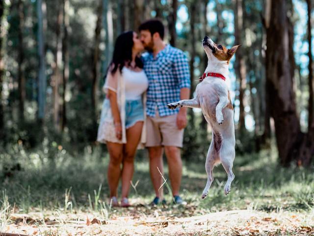 6 consejos para sumar a su mascota al casamiento