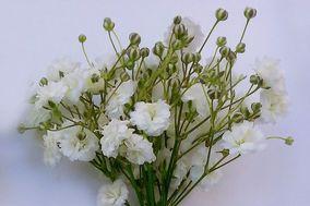 La Fleur Florería