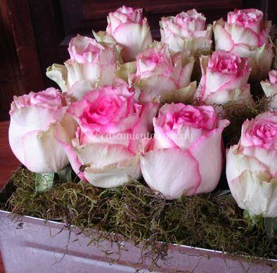 Rosas alineadas
