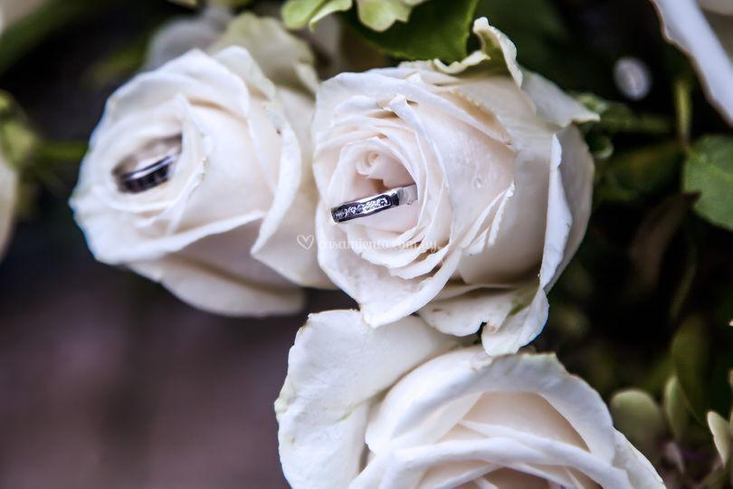 La rama de la novia