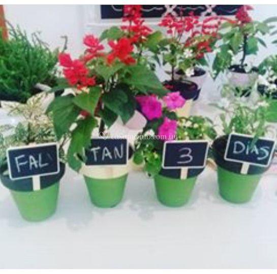 Todo en flores