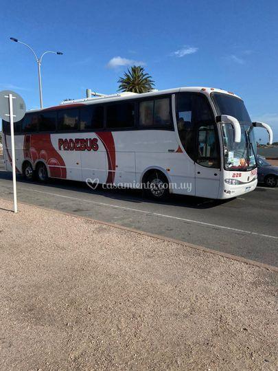 Bus para eventos
